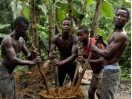 Please sign this Petition: STOP Landgrabbing in Liberia