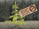 Stop Burning TREES