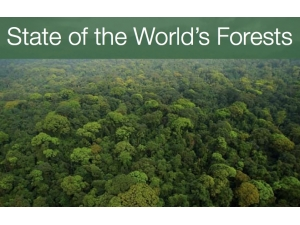 State of the Worlds Forests 2011