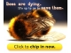 Bees - Our Greatest Friends Are Dying All Over The World