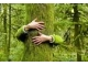 National Tree Huggers 2014 Contest