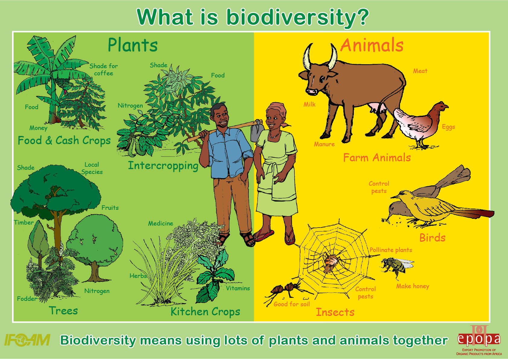 "Essay on ""Biodiversity Conservation"" in Mega Diversity Countries"
