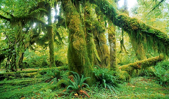 biodiversity rainforest - photo #30